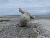 Willi an der Nordsee