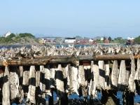 Trockenfischgestell in Reine